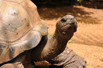 Social Networking and the Awkward Turtle